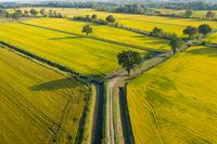 Amazing drone view of rice fields