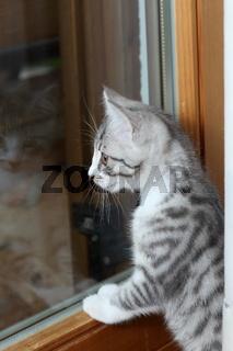 kleine Katze blickt aus Fenster