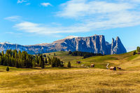 Alpe di Siusi is plateau in the Dolomites