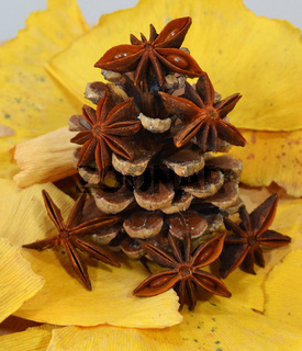 Fir cone and anise
