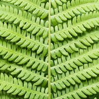 Close-up of a fern leave - macro