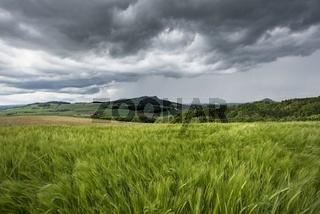 Blick über Weizenfeld in die Hegaulandschaft mit dem Hohenstoffeln