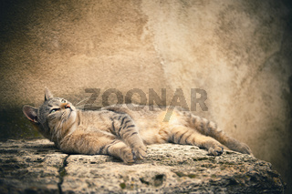Striped tabby cat lying - small focus