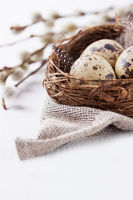Quail eggs in a nest with feathers on a bright background for Easter
