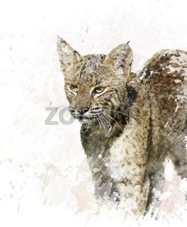 Bobcat portrait watercolor
