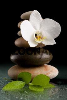 balancing zen stones on black with white flower
