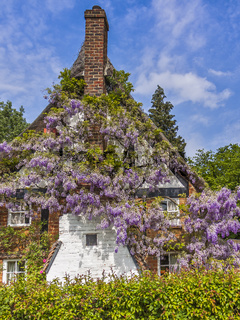 Wisteria Covered Cottage Berkshire UK