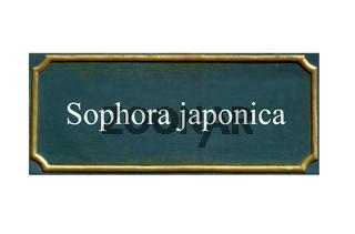 schild Sophora japonica, Schnurbaum