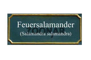 feuersalamander, jahreswesen lurch 2016
