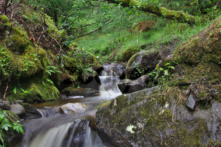Kleiner Bach nahe Falls of Bruar 3