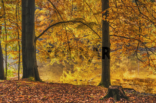 Wald im Herbst | Forest in the autumn