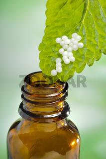 Alternativmedizin mit Globulis einer Heilpflanze