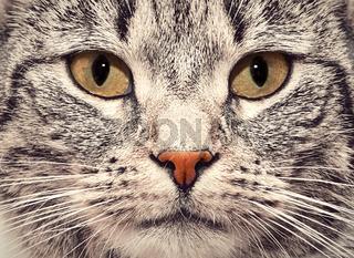 Cat face close up portrait