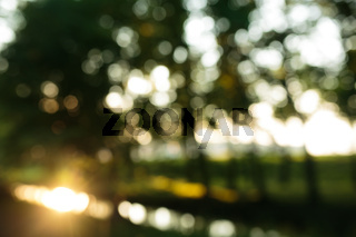 forest in the morning, bokeh background(out focus)