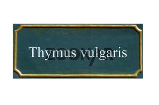schild Thymian