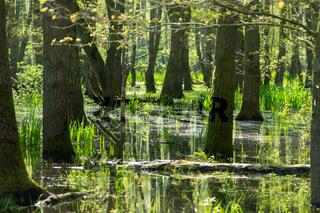 Landschaft am Dümmer See-134