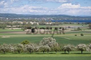 Blick über Streuobstwiesen zum Radolfzeller Aachried mit dem Bodensee