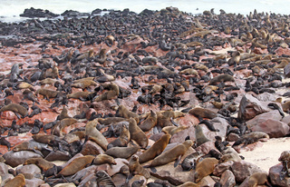 Kolonie Südafrikanische Seebären, Arctocephalus pusillus, Kreuzkap Namibia, South African fur seals, cape cross