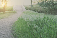 Blurred Nature Trail with White Bridge Background with Instagram