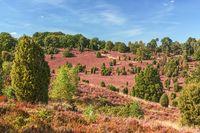 Landschaft in der Lüneburger Heide, Totengrund