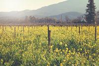Vineyard in Spring with Vintage Instagram Film Style Filter