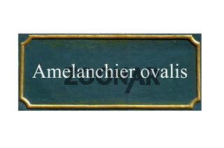 schild Amelanchier ovalis, Gemeine,Gewoehnliche Felsenbirne