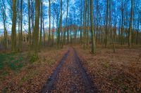 Waldweg in Deutschland