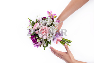 Giving a pink bouquet from gillyflowers and alstroemeria on white
