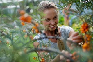 woman picking berries