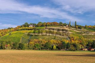 Saale Unstrut Weinberge - Saale Unstrut vineyards 03