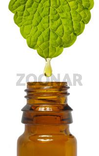 Tropfen Öl für Kosmetik fällt vom Blatt einer Heilpflanze