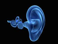 3D human ear anatomy