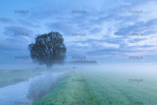 tree by river in morning fog