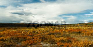 Plants Ground Cover Change Color Alaska Mountains Autumn Season