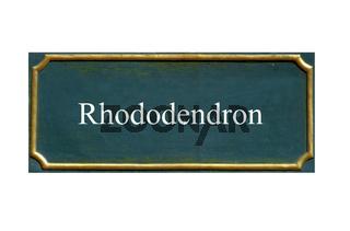 schild , rhododendren, rhododendron