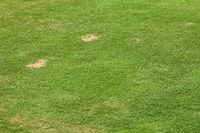 Green grass playing field