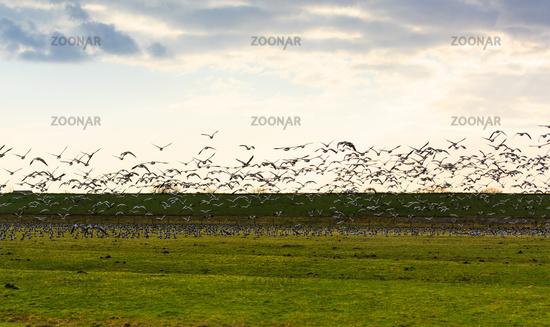 Goose flying away at sunset