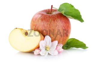 Apfel Frucht geschnitten Freisteller freigestellt isoliert
