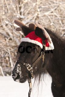 Lustiges Weihnachstpony