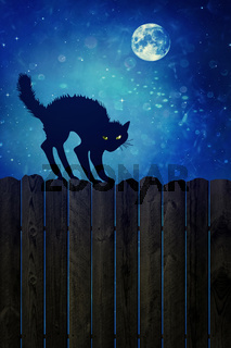 Black cat on wood fence at  night