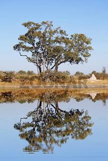 Landschaft im Moremi Game Reserve, Botswana; landscape in Moremi Game Reserve, Botsuana