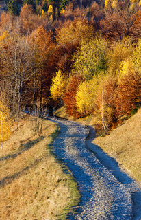 Rural road and golden autumn in mountain.