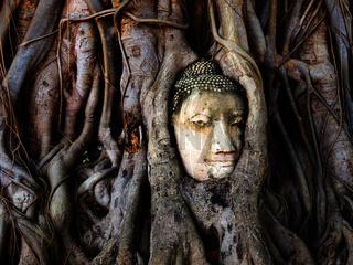 Kopf einer Buddha Statue