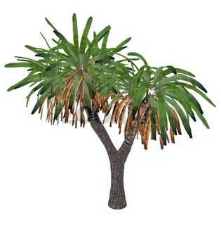 Canary Islands dragon tree or drago, dracaena draco - 3D render
