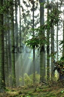 Lichtstrahl im Wald