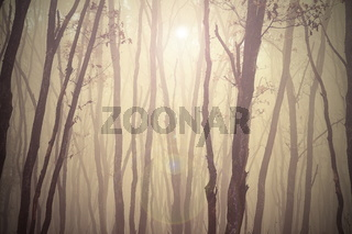 magic misty forest view