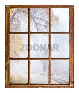 foggy autumn scene