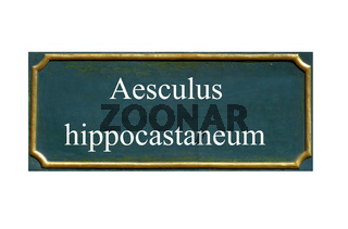schild rosskastanie, aesculus hippocastaneum