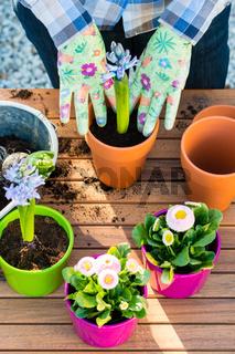 Woman planting flower bulbs