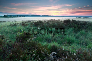 misty summer sunrise on marsh